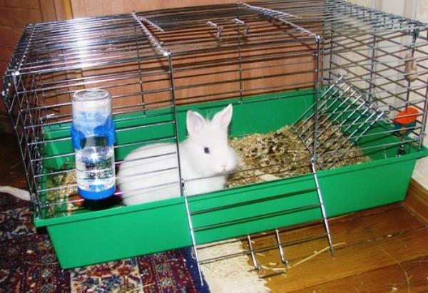 Белый декоративный кролик в переносной клетке на время лечения цистита