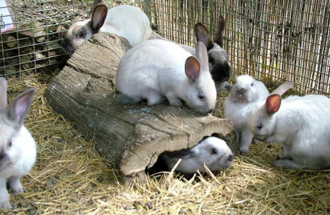 Молодые кролики в металлической клетке с подстилкой из соломы