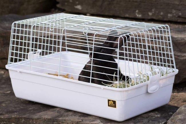 Черный кролик из зоомагазина в белой переносной клетке
