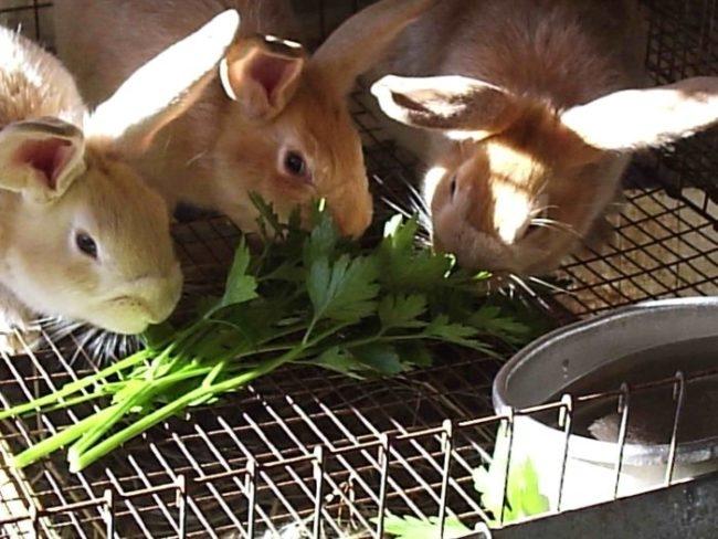 Кормление молодых кроликов свежей травой при метеоризме