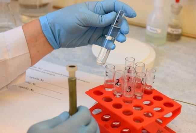 Исследование крови больного кролика на предмет заражений геморогичкой