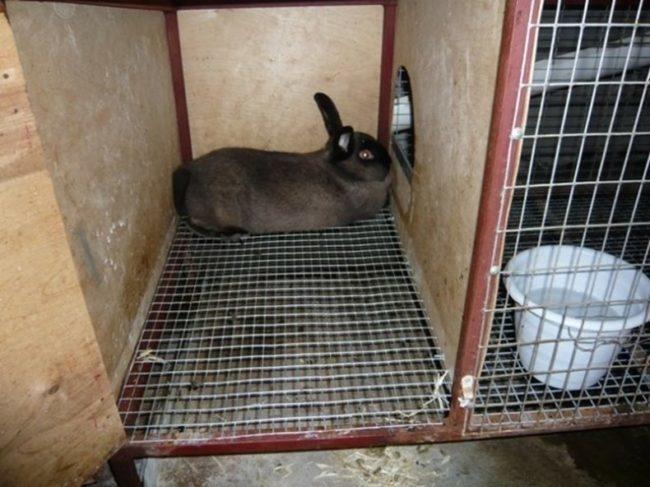 Взрослый кролик в самодельной клетке с полом из металлической сетки