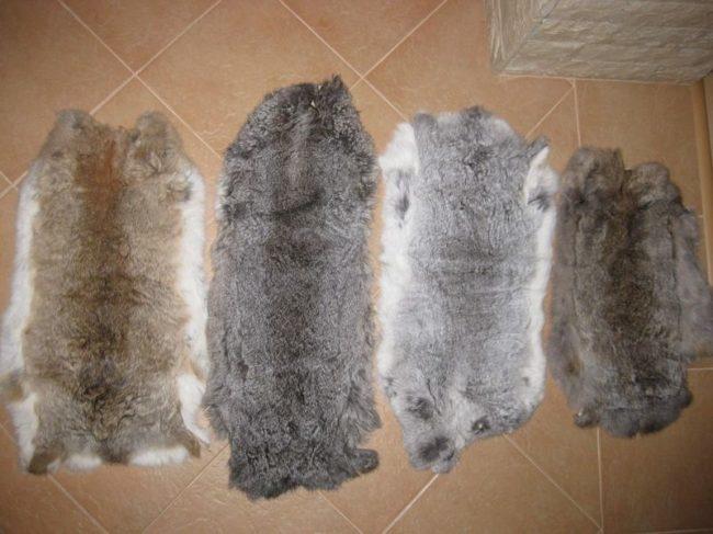 Шкурки кроликов ка полу из керамической плитки