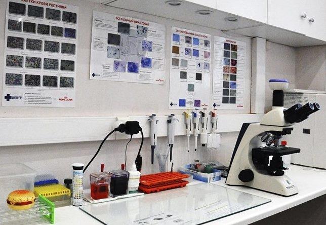 Рабочее место специалиста ветеринарной лаборатории, занимающегося выявлением заболеваний у кролика