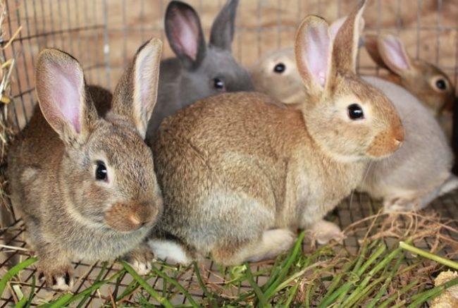 Проволочная клетка с кроликами среднего размера в приусадебном хозяйстве