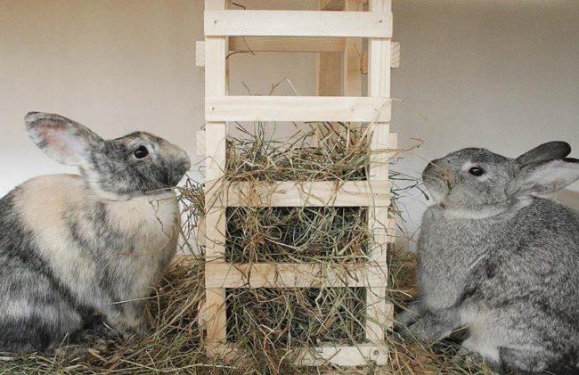Самодельная кормушка из реек для сена в загоне со взрослыми кроликами