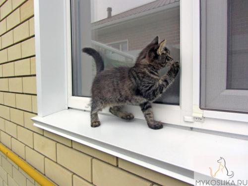 Котёнок лазит по подоконнику и дерёт оконную сетку