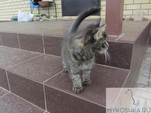 Котёнок лазает по ступенькам