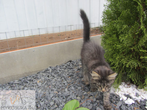 Котёнок играет рядом с прудом в частном доме ходит по щебёнке