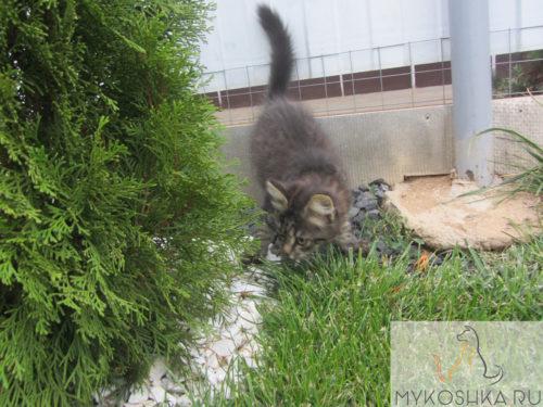 Котёнок играет рядом с прудом в частном доме ходит по щебёнке осматривает траву