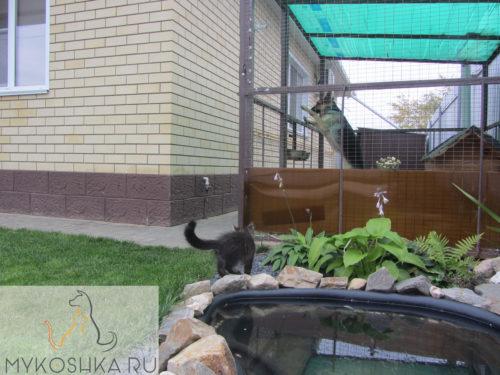 Котёнок гуляет рядом с вольером в котором живёт Немецкая овчарка