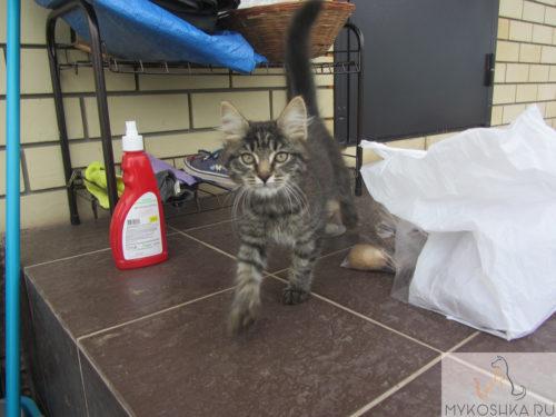Котёнок гуляет по крыльцу частного дома
