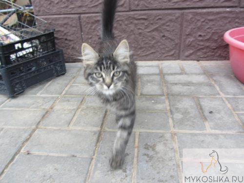 Котёнок гуляет во дворе частного дома