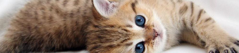 Котёнок лежит на боку и мурчит