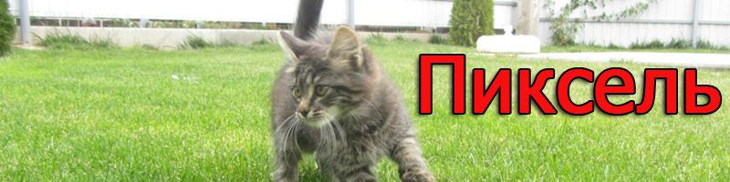 Котёнок ПИКСЕЛЬ