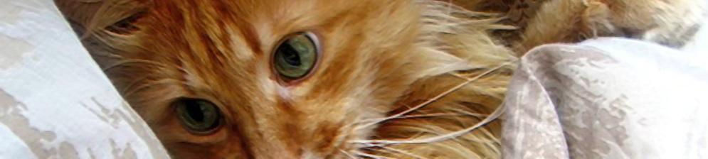 Рыжий кот немного приуныл